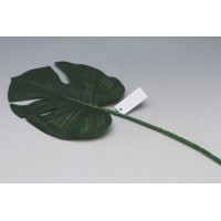 Filodendron list