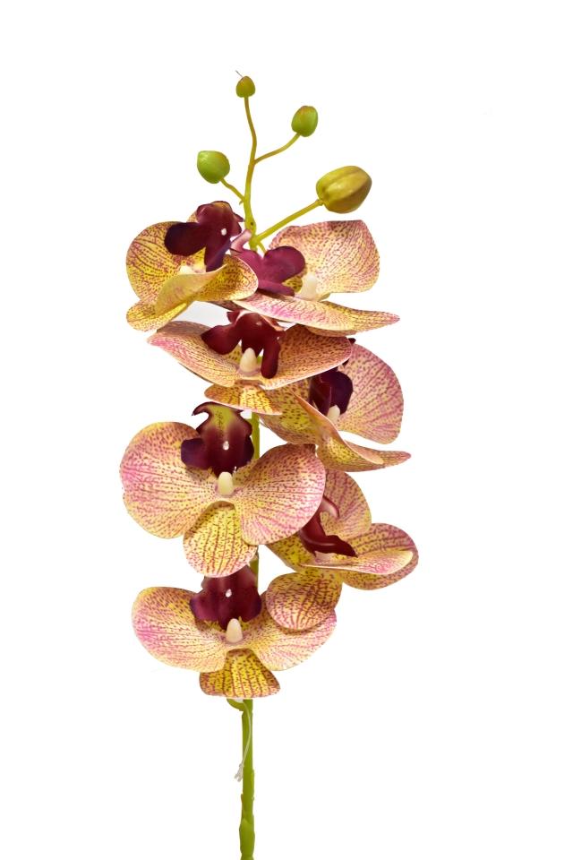 Orchidej Phalaenopsis 79 cm, 7 květů, světle růžová