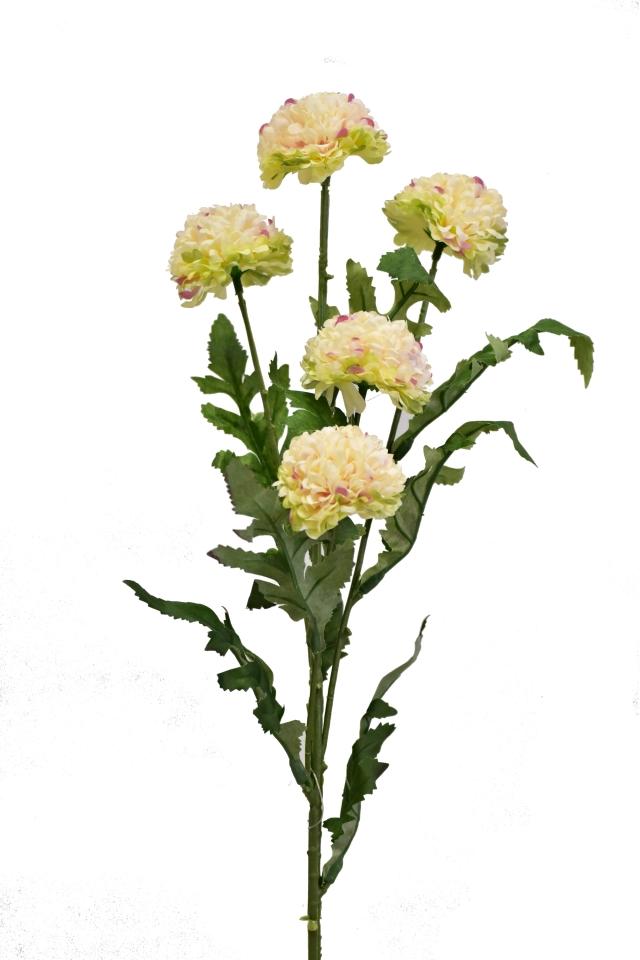 Tagetes 67 cm, žíhaný
