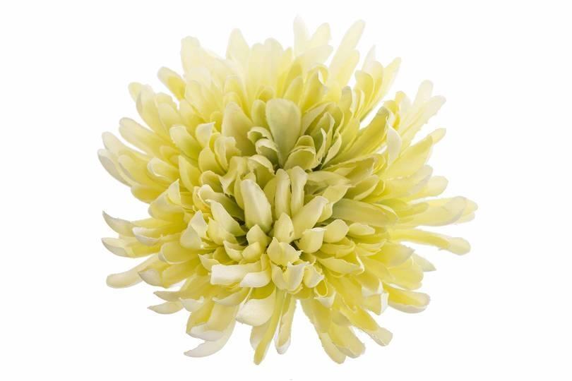 Vazbová chryzantéma 13 cm, zelená
