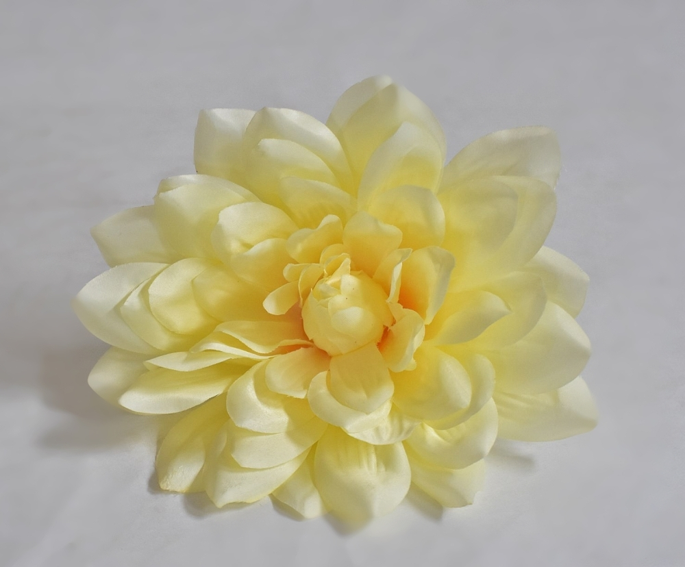 Květy Dahlia krémové