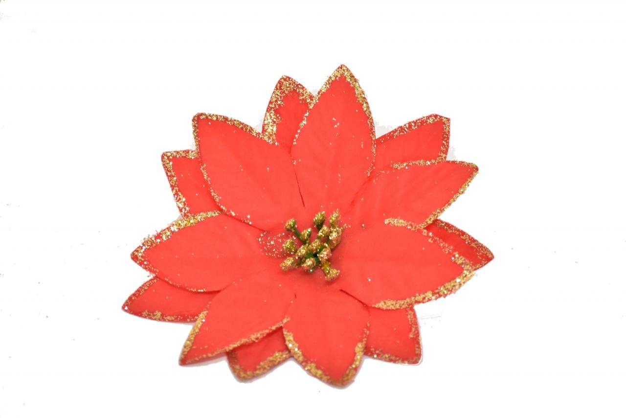 Vánoční hvězda květ
