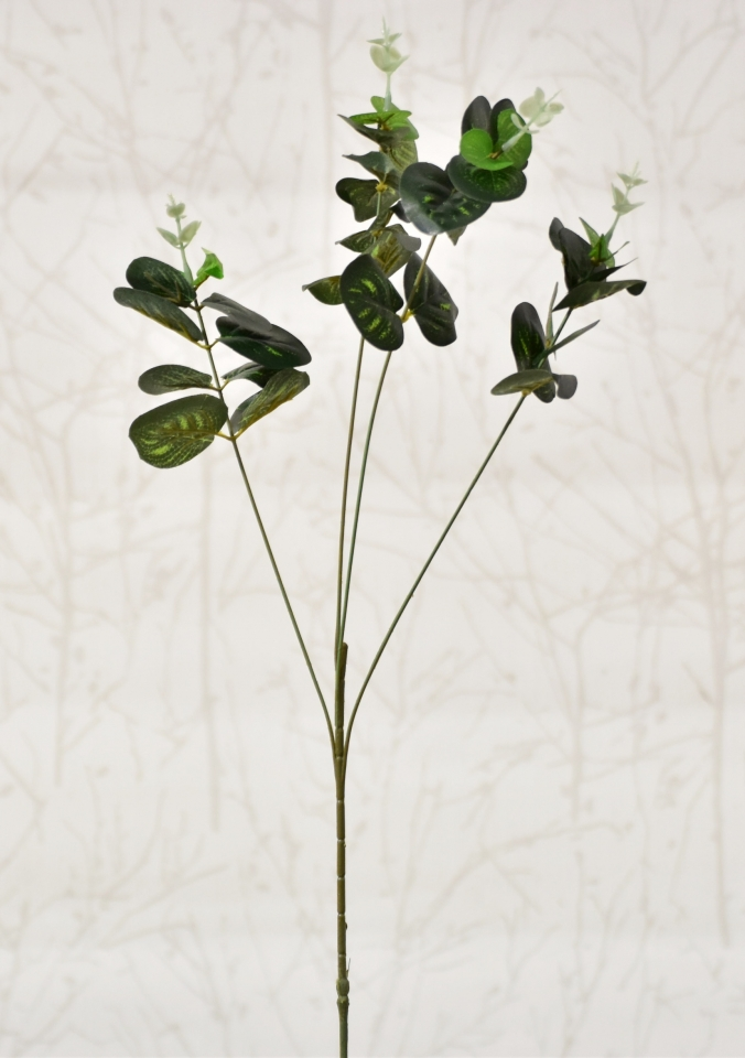 Větvička eukalyptus 67 cm