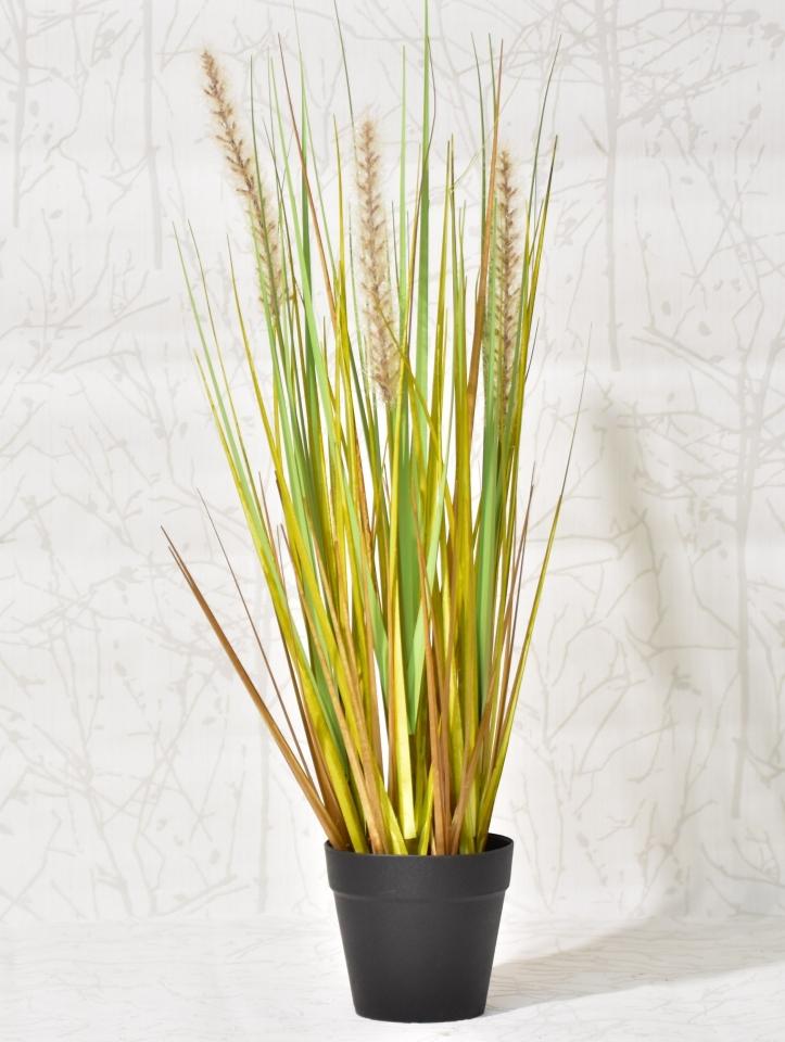Dekorativní tráva v květináči 50 cm