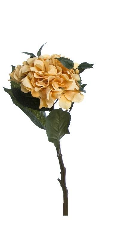 Hortenzie žlutá 50 cm