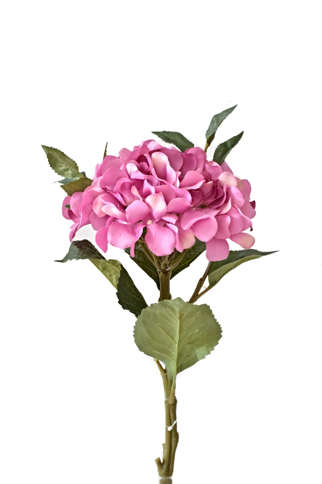 Hortenzie tmavě růžová 50 cm
