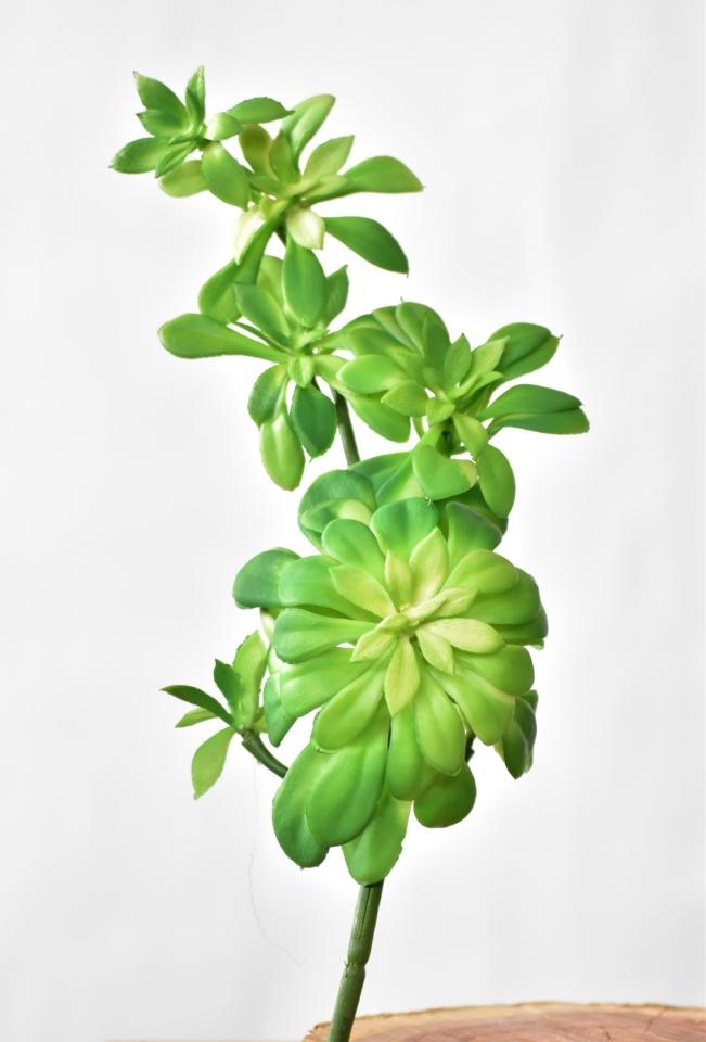 Umělý sukulent 30 cm, zelený
