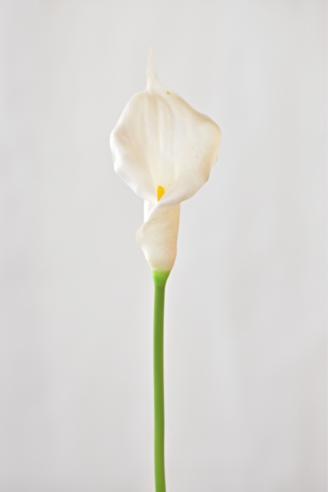 Umělá kala bílá, 41 cm