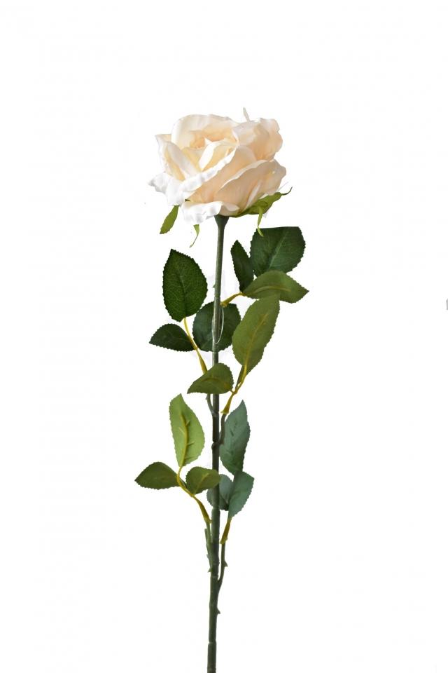 Růže champagne 92 cm
