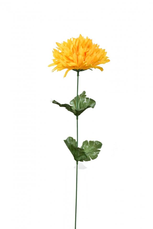 Chryzantéma jehlicovitá žlutá 50 cm
