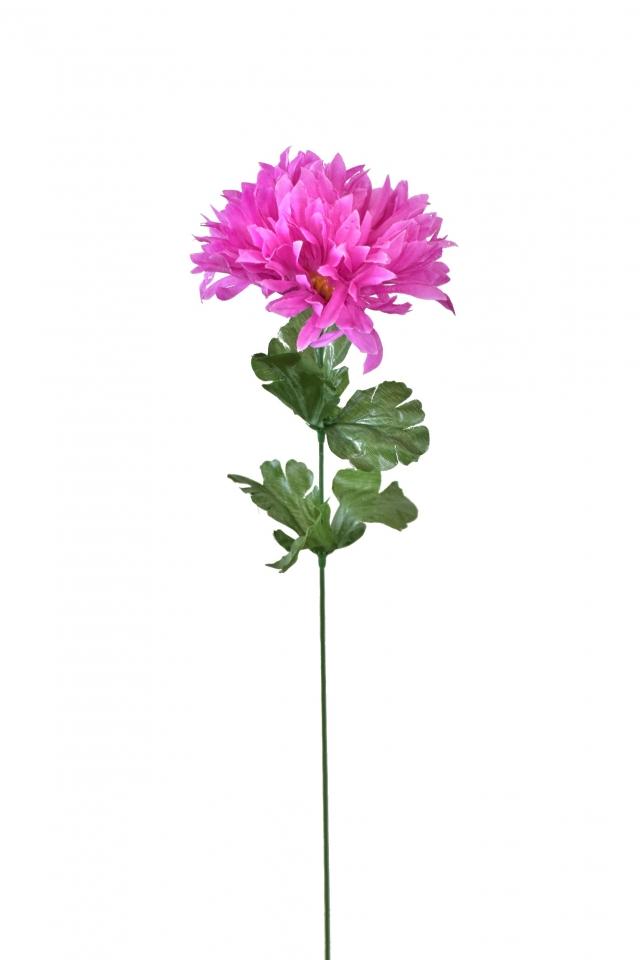 Chryzantéma jehlicovitá fialová 50 cm