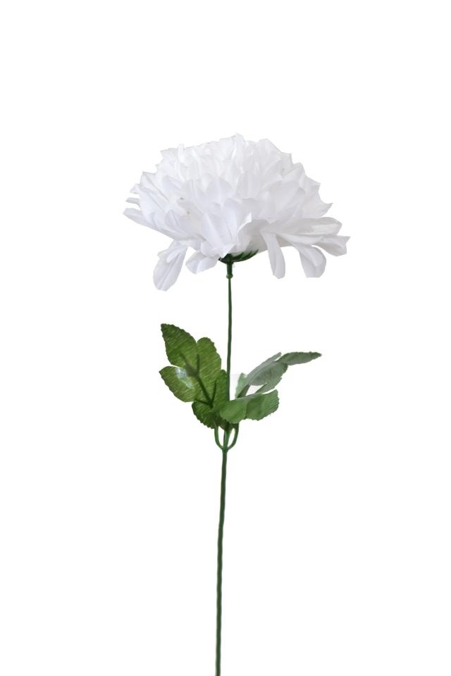 Chryzantéma bílá 50 cm
