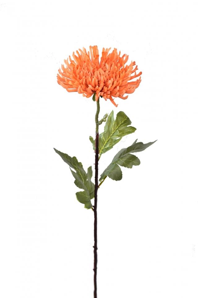 Chryzantéma jehlicovitá oranžová 84 cm