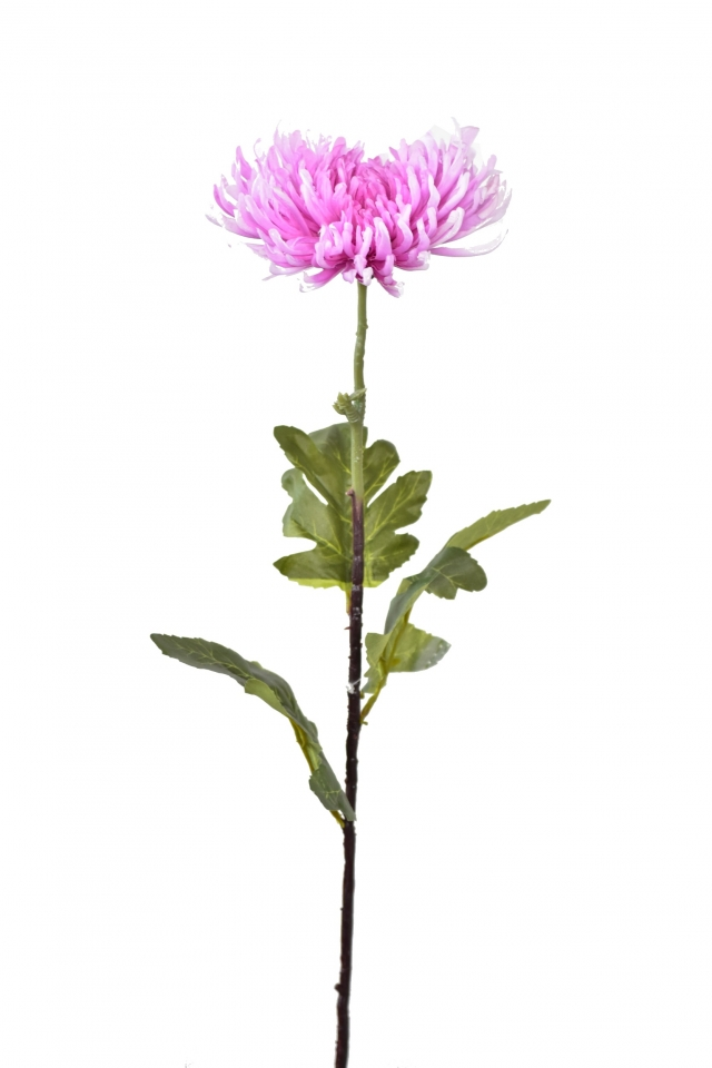 Chryzantéma jehlicovitá světle fialová 84 cm