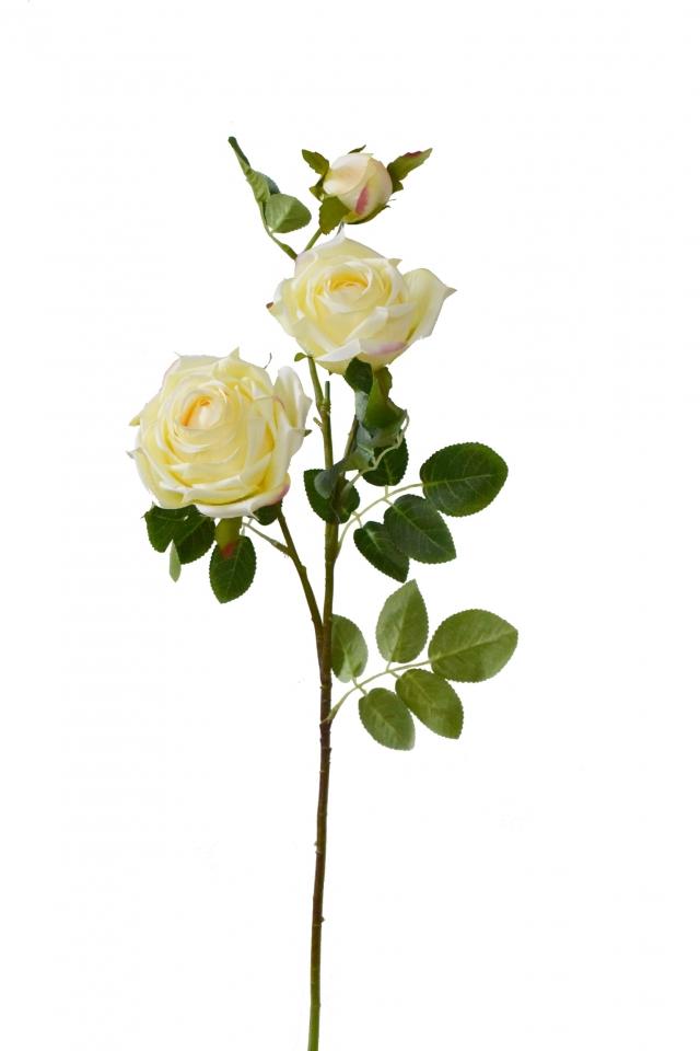 Růže champagne 74 cm