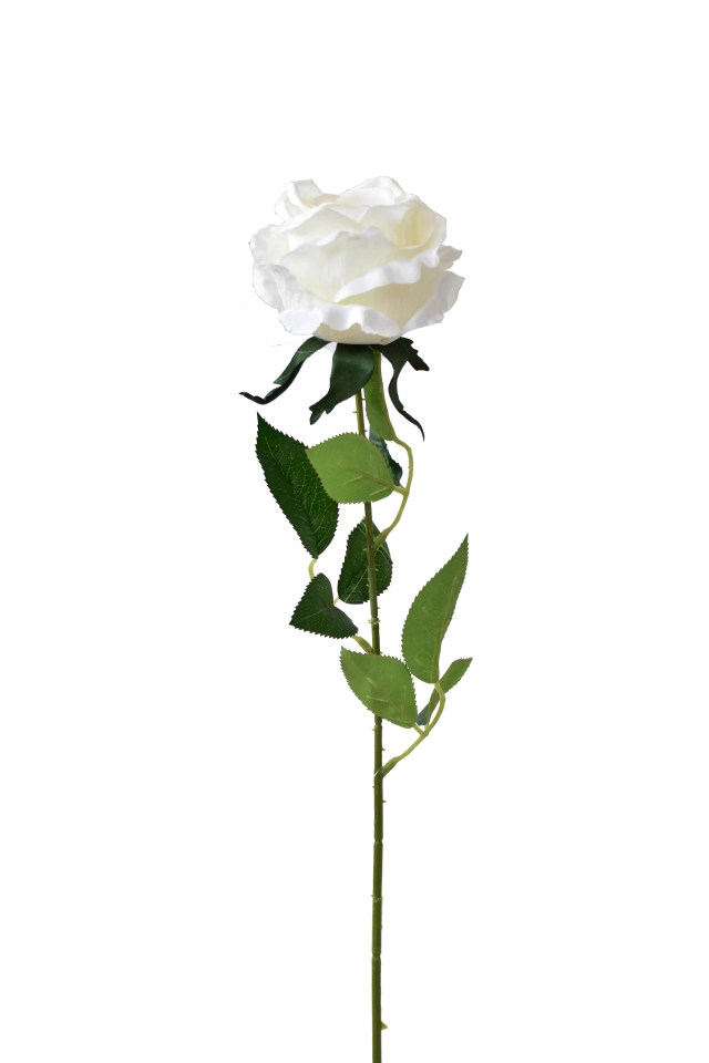 Růže bílá 65 cm