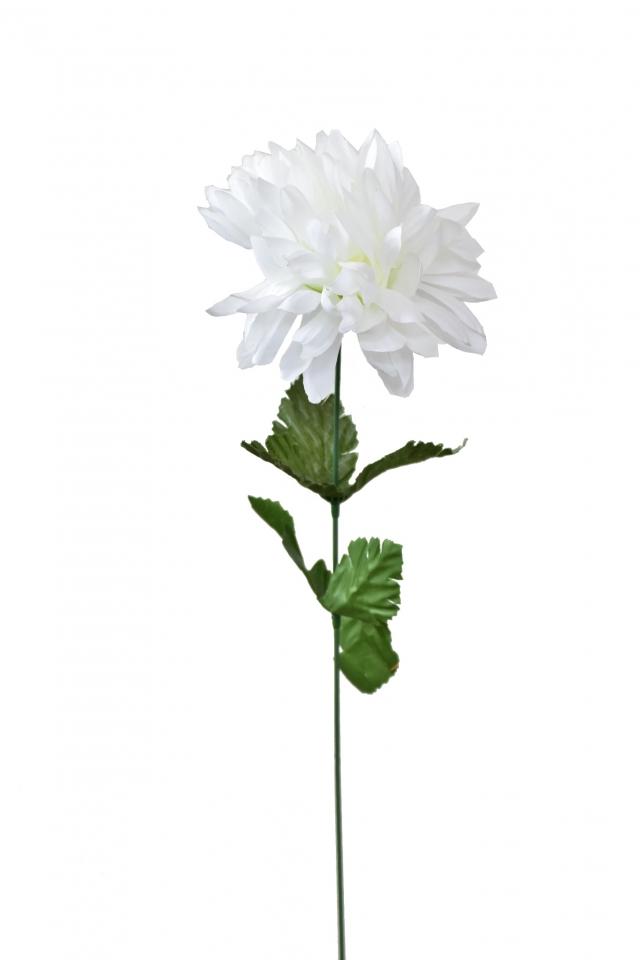 Chryzantéma bílá 55 cm