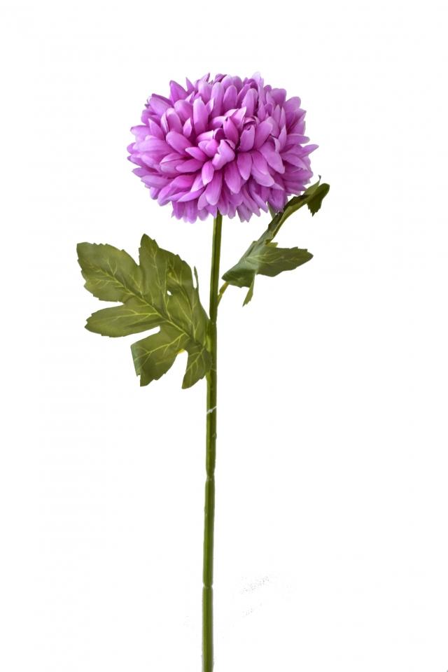 Chryzantéma tmavě fialová 67 cm