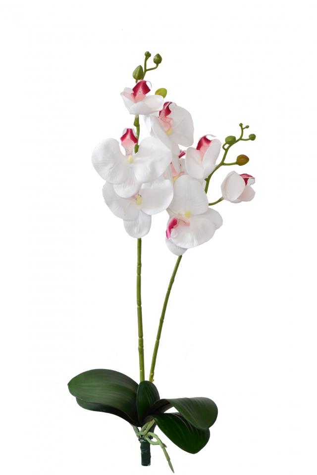 Orchidej Phalaenopsis 57 cm, bílo-růžová