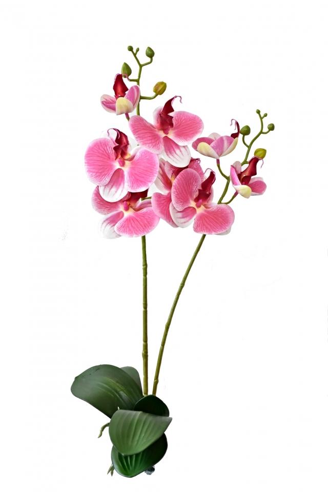 Orchidej Phalaenopsis 57 cm, růžová