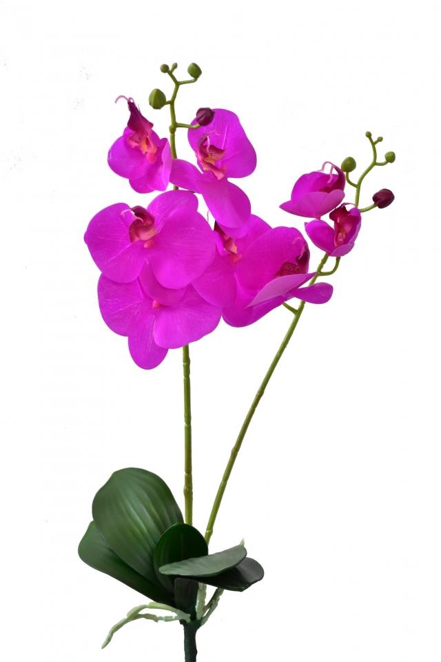 Orchidej Phalaenopsis 57 cm, fialová