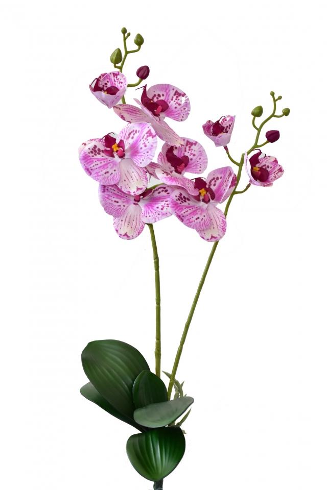 Orchidej Phalaenopsis 58 cm, růžová