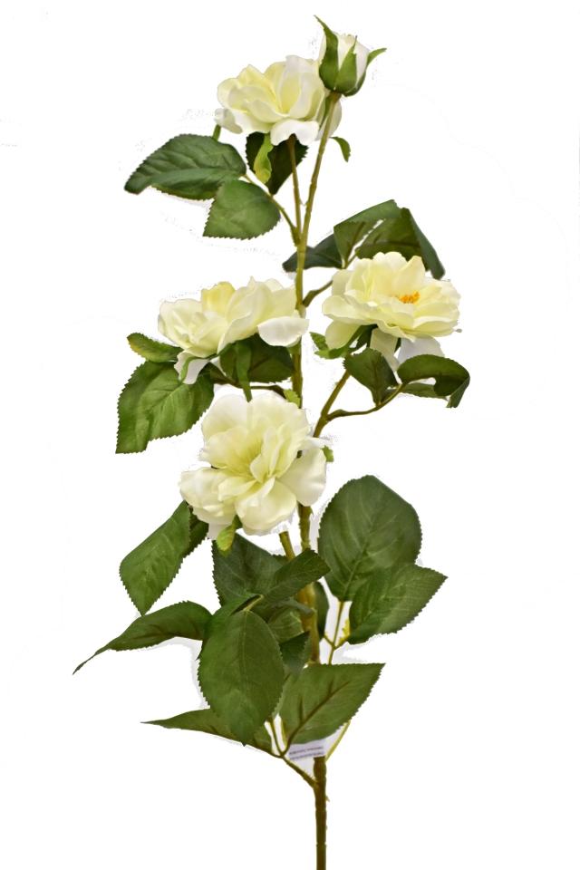 Čajová růže 80 cm, bílá