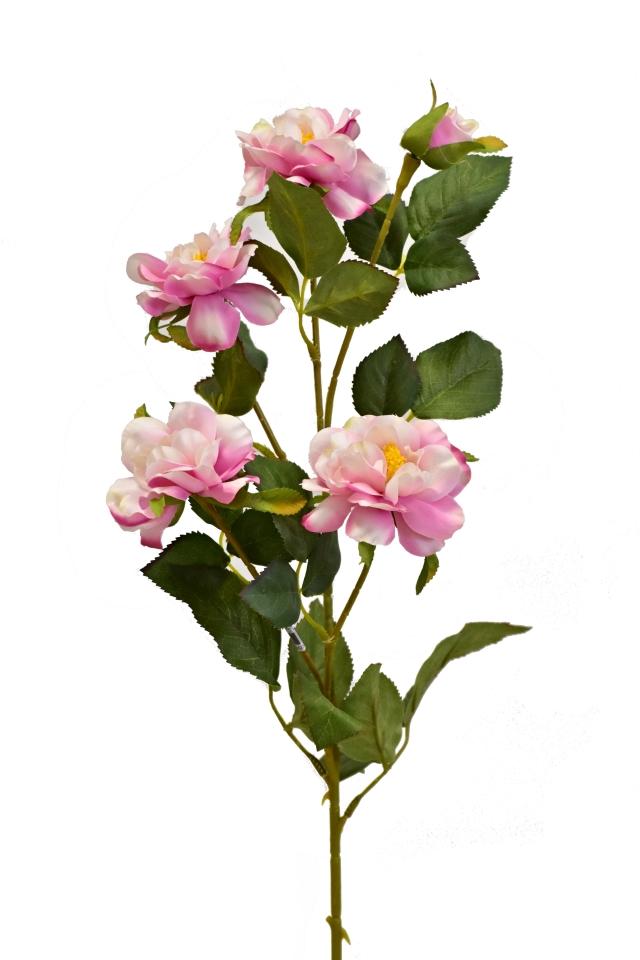 Čajová růže 80 cm, světle růžová