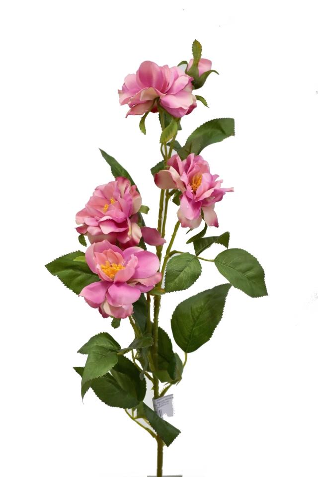 Čajová růže 80 cm, tmavě růžová
