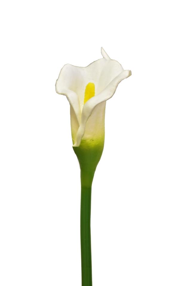 Umělá kala bílá, 63 cm