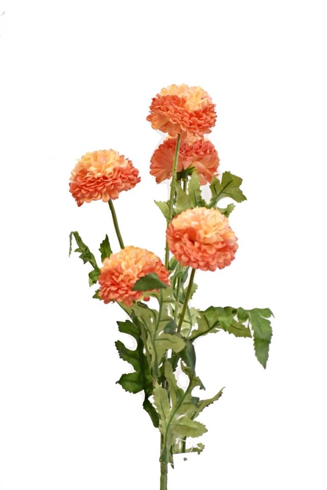 Tagetes 67 cm, oranžový