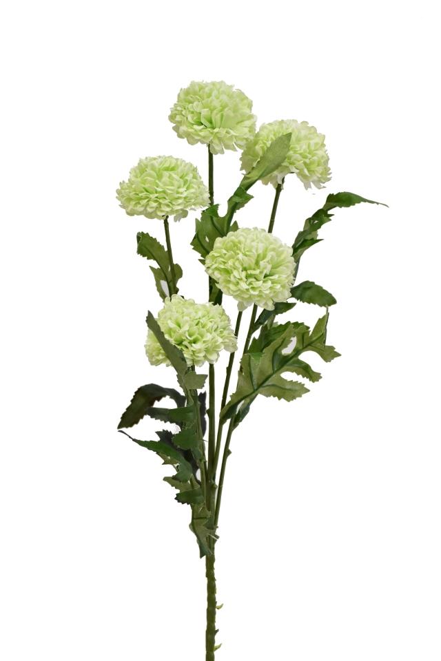 Tagetes 67 cm, zelený