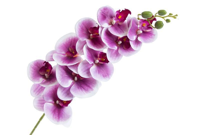 Orchidej Phalaenopsis 95 cm, lila