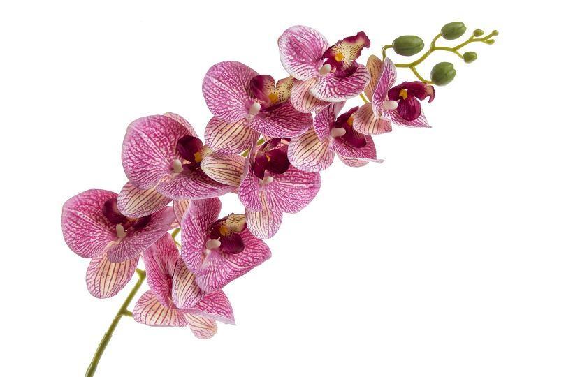 Orchidej Phalaenopsis 95 cm, růžový