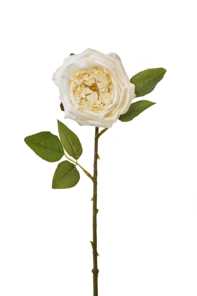 Umělá anglická růže krémová, 50 cm