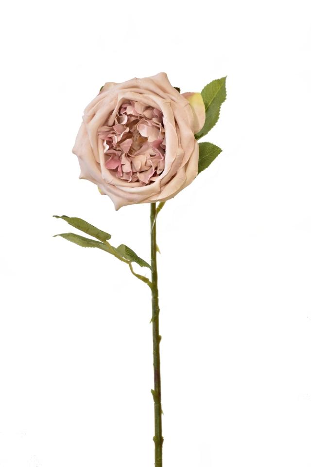 Umělá anglická růže pudrová, 50 cm