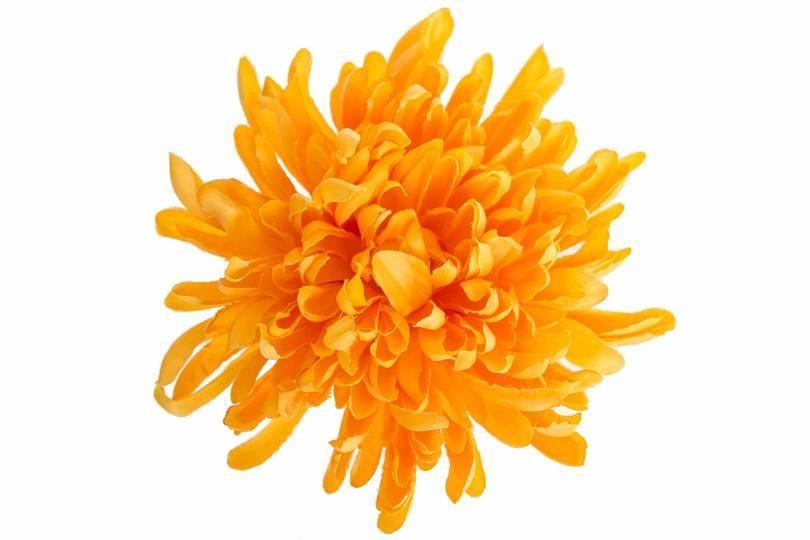 Vazbová chryzantéma 13 cm, oranžová